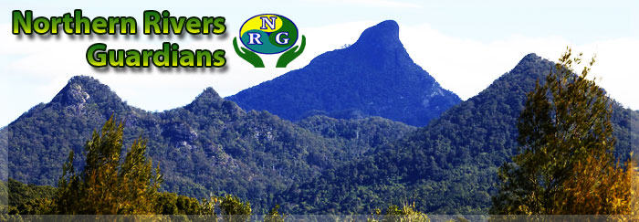Mount Warning with NRG Logo